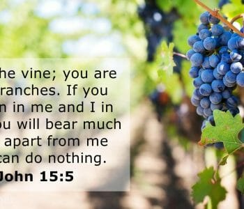 how to be a fruitful & victorious christian, fruitful and victorious, fruitful christian, fruitful victorious christian, john 15 5, jesus is the vine